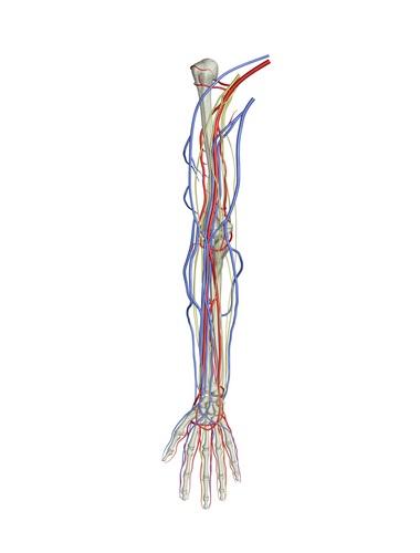 Arm Nerve Damage Jury Awards