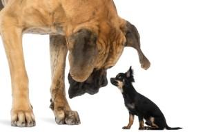 smalldog