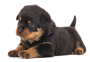 dog breed homeowners insurance