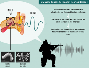 Infographic explaining how loud noises lead to hearing loss